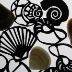 conchas Animafro