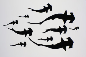 tubarões martelo Animafro