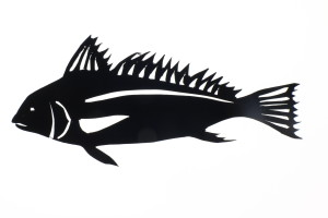 peixe Animafro