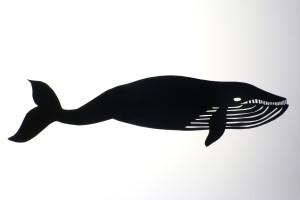 baleia Animafro